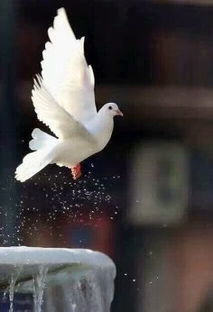 any of certain birds of the pigeon family. The names pigeon and dove are often used interchangeably. Pretty Birds, Love Birds, Beautiful Birds, Animals Beautiful, Beautiful Pictures, Animals And Pets, Cute Animals, Nature Animals, Wild Animals