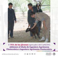 El 75% de los jóvenes egresados del CSAEGRO, obtienen el título de Ingeniero Agrónomo Fitotecnista o Ingeniero Agrónomo Zootecnista. SAGARPA SAGARPAMX #MéxicoSiembraÉxito