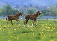 Foals Spring Images, Stock Pictures, Royalty Free Foals Spring Photos And Stock Photography