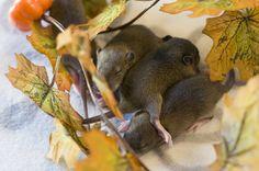 полупасючки ищут дом #крыса #крысы #спб #фотосет #питер
