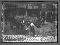 Pequena aldeã guiando carro de bois, Porto, 1900-1919
