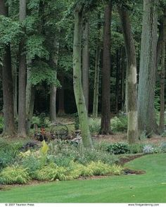 A majestic stand of mature oak, ash, and beech trees is situated on a berm. Solutions for wet shady areas.