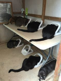 Carly-Sue Cooper is using seven SureFeed Microchip Pet Feeders to control the diets of her seven cats! Auto Cat Feeder, Pet Feeder, Cat Fence, Animal Gato, Cat Enclosure, Cat Room, Outdoor Cats, Pet Puppy, Cat Furniture