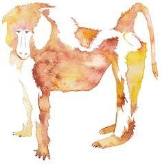 Baboon Elisa Solignac illustration