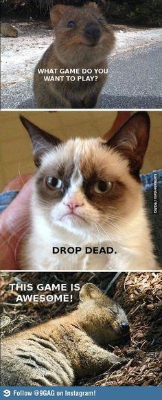 Grumpy  Cat. Wow. So rude lol!