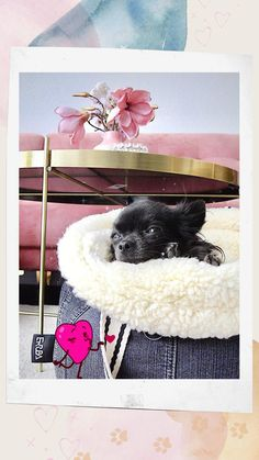 Small Pet Carrier, Dog Carrier Purse, Dog Carrier Bag, Teacup Chihuahua, Chihuahua Puppies, Cute Dogs And Puppies, Designer Dog Carriers, Cute Dog Pictures, Dog Supplies