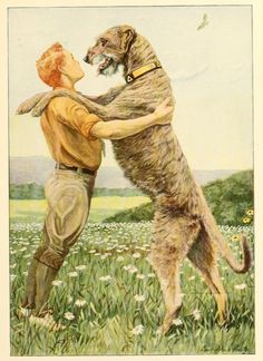 Irish wolfhound, right. The book of dogs. 1919.