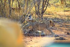 The Real Mystery of Wildlife Photography Taking Pictures, Wildlife Photography, Safari, Mystery, Animals, Art, Art Background, Animales, Animaux
