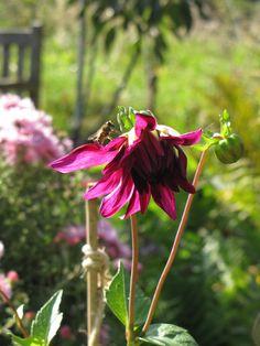"""""""Die Natur gärtnert mit, ob du willst oder nicht"""" (Sibylle Maag) #Garten #Zitat"""