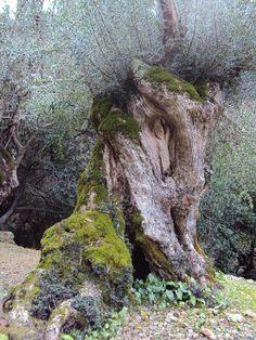 ENT del Barranco de Biniaraix (Mallorca)