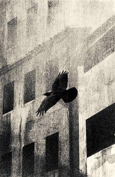 "Saatchi Online Artist: Hristo Kovatliev; Photography New Media ""crow"""