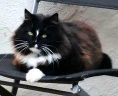 LOST CAT: 08/07/2017 - Dartford, Kent, England, United Kingdom. Ref#: L33202 - #CritterAlert #LostPet #LostCat #MissingCat