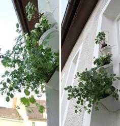 ausbildung garten und landschaftsbau berlin photographie abbild der fbcbfaedcffcadffab patio ideas julia