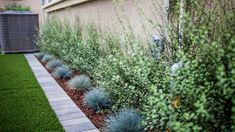 Water less grass Archives - Orange County Landscape Contractor Landscaping Supplies, Modern Landscaping, Front Yard Landscaping, Backyard Landscaping, Drought Resistant Landscaping, Drought Resistant Plants, Drought Tolerant, Fescue Grass Seed, Blue Fescue