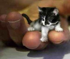 Just a tiny tiny little cat...