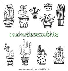 Hand drawn succulent and cactuse set. Doodle florals in pots. Vector botanical set with cute house interior plants   - stock vector