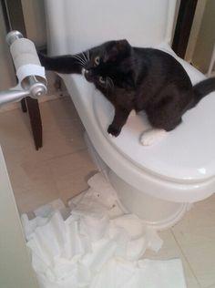 Oh kitty! Plastic Laundry Basket, Kitty, Animals, Home Decor, Animales, Homemade Home Decor, Kitten, Animaux, Kitty Cats