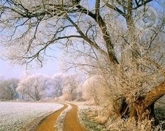 I like scenes like this but hate cold weather.