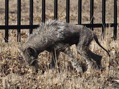 Residentes da Califórnia (EUA) relatam avistamento de chupa-cabra