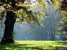 Oak wood advantages