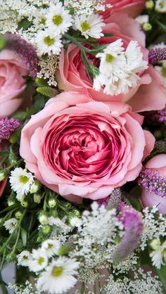 rose+phone+wallpaper (845×1500)