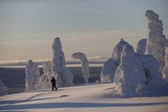 In Lapland Natures Outdoor Sculpture Park