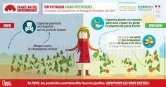 Zéro pesticides dans mon potager. Infographie