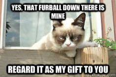 yes that furball down there is mine regard it as my gift to - grumpy cat