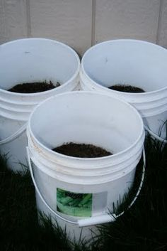 Grow potatoes in 5 gal buckets...maybe paint the buckets to make them look better