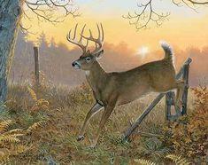 whitetail deer images Sunrise Retreat-Whitetail Deer by Persis C. Wildlife Paintings, Wildlife Art, Animal Paintings, Deer Paintings, Deer Photos, Deer Pictures, Hunting Art, Deer Hunting, Hunting Painting