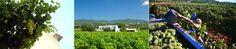 El consumo de vinos de Ibiza crece más un 630% en la península https://www.vinetur.com/2014082616524/el-consumo-de-vinos-de-ibiza-crece-mas-un-630-en-la-peninsula.html