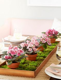 Indoor Garden, Indoor Plants, Begonia, Violet Plant, Saintpaulia, Gras, Table Centerpieces, Container Gardening, Vegetable Gardening