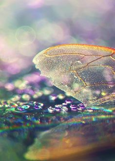 iridescent | mother-of-pearl | gleaming | shimmering | metallic rainbow | shine | insect wing . bokeh photography