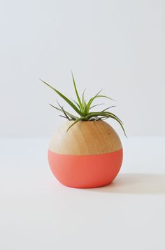 DIY Color-blocked air plant pot