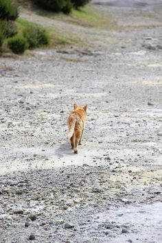 Furnas  #azores #visitazores #furnas #cat