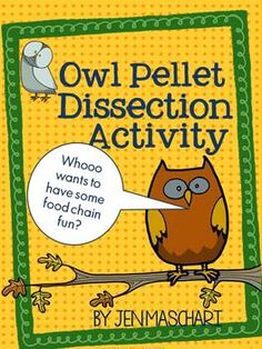 Owl Pellet Dissection Activity ~ Students love exploring the food chain through this science investigation!  This packet introduces them to key vocabulary and concepts and encourages authentic scientific exploration and discussion.  FUN, too!  $