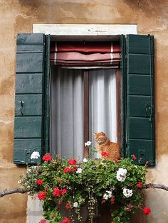 Kitty in the window . Cat Window, Window Boxes, Window Sill, Beautiful Architecture, Architecture Details, Through The Window, Old Doors, Flower Boxes, Doorway