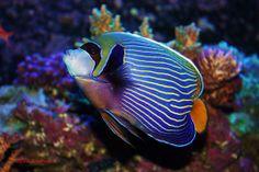 Just 1 word WOW Marine Aquarium Fish, Reef Tanks, Water Life, Exotic Fish, Aquariums, Sea Creatures, Color Inspiration, Sea Shells, Coral