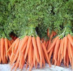 A cenoura conta com muitos benefícios para a nossa saúde, por isso se tiver chance plante-a em sua casa :) #cenoura #plantar #horta