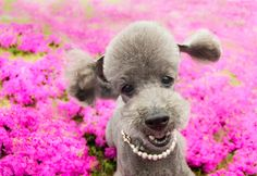 a carpet of flowers.