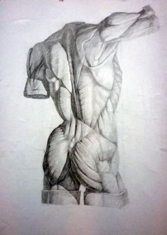 Exceptional Drawing The Human Figure Ideas. Staggering Drawing The Human Figure Ideas. Male Figure Drawing, Figure Drawing Reference, Anatomy Reference, Human Anatomy Drawing, Body Drawing, Life Drawing, Anatomy Sketches, Body Sketches, Body Anatomy