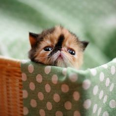 help! i'm drowning in a cloth bed!