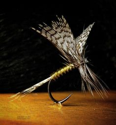 Fanwing Olive By Robert Strahl
