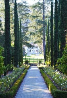 Italian cypress trees lining the walkway! Garden Hedges, Garden Paths, Garden Landscaping, Formal Gardens, Outdoor Gardens, Modern Gardens, Japanese Gardens, Small Gardens, Italian Garden