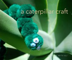 Make a caterpillar and a cocoon.