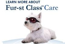 Learn More about Fur-st Class Care { Flying with your dog}