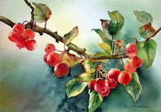 Crab apples after rain by Ann Mortimer