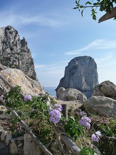 Flowers on Capri Island