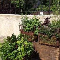 Our container herb garden – using old metal milk crates and lined with moss - Modern Milk Crate Shelves, Metal Milk Crates, Milk Crate Storage, Old Wooden Crates, Herb Garden Pallet, Container Herb Garden, Pallets Garden, Herbs Garden, Herb Gardening