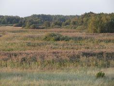 Randu meadows late summer